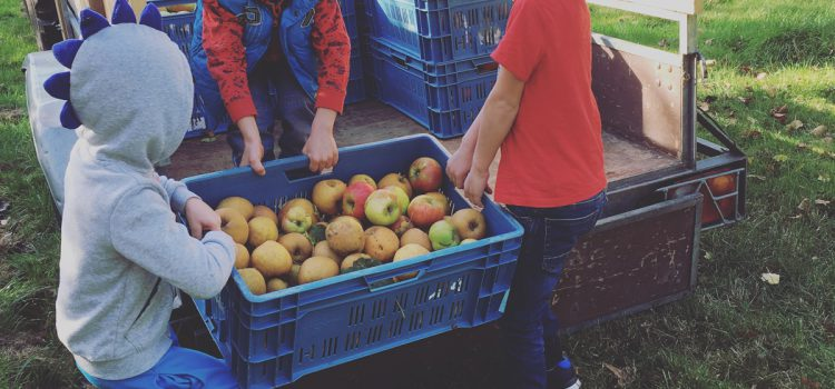 Fryske Frucht zoekt appels