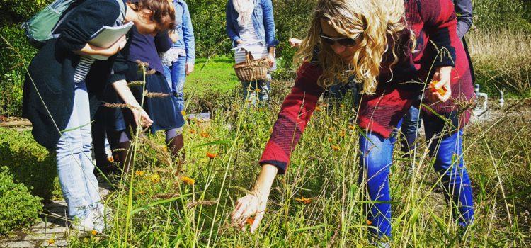 7-daagse kruidencursus bij De Kruidhof Hortus van Fryslân