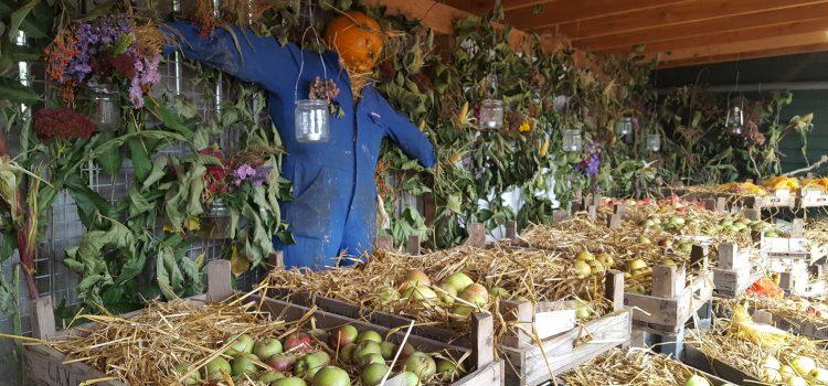 Oogstfeest en fruitshow bij De Kruidhof hortus van Fryslân