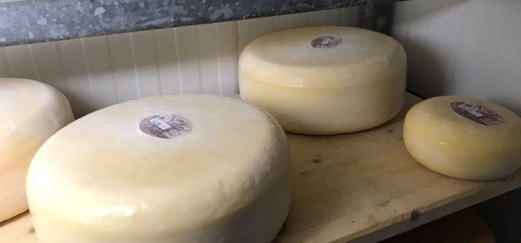 Pingokaas van de rauwe melktap Molke en Huning weer verkrijgbaar