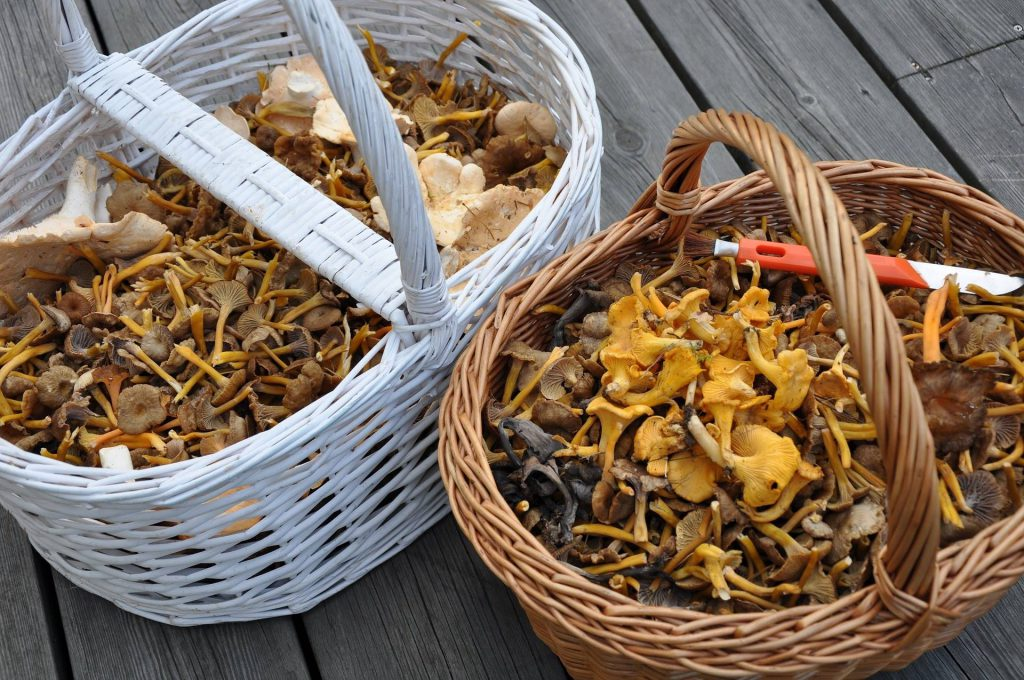 Workshop paddenstoelen & diner bij Het Spijshuys