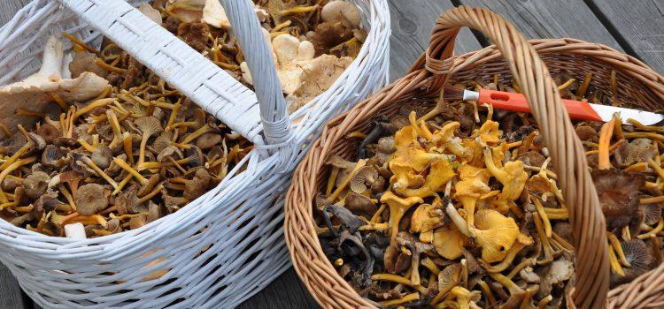 Workshop paddenstoelen plukken & diner bij Het Spijshuys
